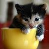 oulfis: A tiny kitten in a teacup. (kitten)