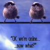 faithsdiary: (birds)