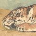 nightdog_barks: (Tiger Tiger)