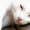 ankoku: (Sleepy / Lazy)