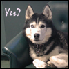 jmtorres: Loki in dog form. Text: Yes? (question, Loki, agreement)