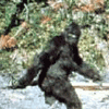 momentarygrace: from the famous Patterson-Gimlin film of something walking... (patterson bigfoot)