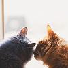 radostia: (les gatos)
