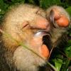 mrcreek: silky anteater (pic#265189)