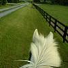 enviropony: (ride, horse)