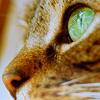 et_tu_lj: (cat's eye)