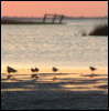 ext_39861: birds on shore (downtide)