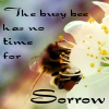 "kerravonsen: A bee sipping from a flower: ""The busy bee has no time for sorrow"" (busy bee)"