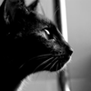 dinictis: (Cat // Profile - Thought)