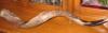 avivasedai: (shofar)