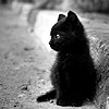 sylvaine: Black-and-white photo of a black kitten beside a ledge. ([gen] black kitty)