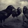 pernata_fogel: (tri ptichki)