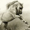 technosage: (misc_white horseplay)