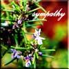 gillo: (Sympathy flowers)