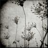 and_i_waited: (weeds)