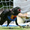 mental_squint: (Aminals - Soccer Crow)