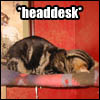 sarah_writes: (LOLcat - headdesk)
