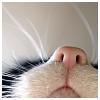 aelurophile: (whiskers)