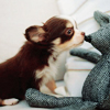 alias: (Puppies: kiss kiss)