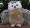 flaviomatani: (owl)