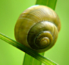 elettaria: (Snail)