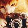 shonen_angel: (Miss Kitty)