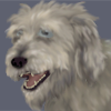 baskerville: The smiling face of a big grey dog resembling an Irish Wolfhound. (Great Grey Dog)