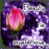 "kerravonsen: a rose bud: ""Beauty is mysterious"" (beauty)"