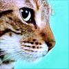 toestastegood: (Cat)