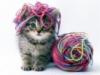 mystory: (котенок)