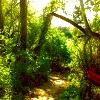 fegie: (spoutwood_fae path)