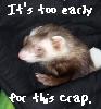 waldo: (Ferrets: Magick - Too Early)