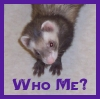 waldo: (Ferret: Magick - Who Me?)