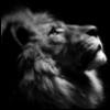 hkpadfoot: (lion profile)