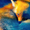 cindershouse: A red fox curled up. (Kitsune - Fox)