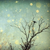 lyras: Sparkling tree (Default)
