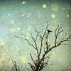 lizabelle: (Sparkling tree)