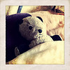 thedivinegoat: A photo of a a well-loved and worn Panda Teddy Bear tucked between a pillow and a duvet. (My Photo - Bedtime)
