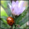 onatempest: (Ladybird)