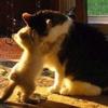 marcicatverse: (kittens hug)