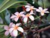 pokemongirl1996: (Flower) (Default)