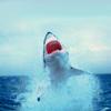 takhallus: (Shark!)