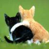 ouri: two kittens hugging ({{{Hug}}})