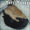 jic: Methos (yellow cat) and Alex (black cat) sleeping curled in a yin yang shape (yin-yang)