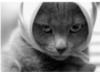 lena_malaa: (я обиделось (кот в платке))