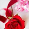 dearly: ([stock] rose & ribbon)