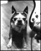 suenix: (antique dog)