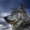 nepravilnyep4el: (Мудрый волк)