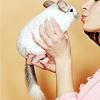 powderedplum: (Critters > Chinchilla > Animal Lovah.)