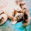 leanwellback: kitty lying on its back (stock- i'm tired of this piece of string)